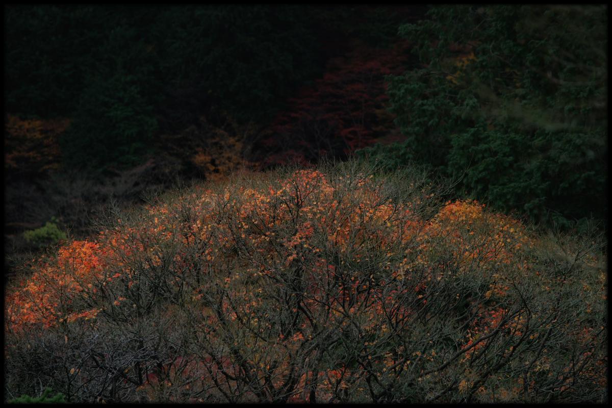 紅葉 2010 <善峯寺> 1_f0021869_23262768.jpg