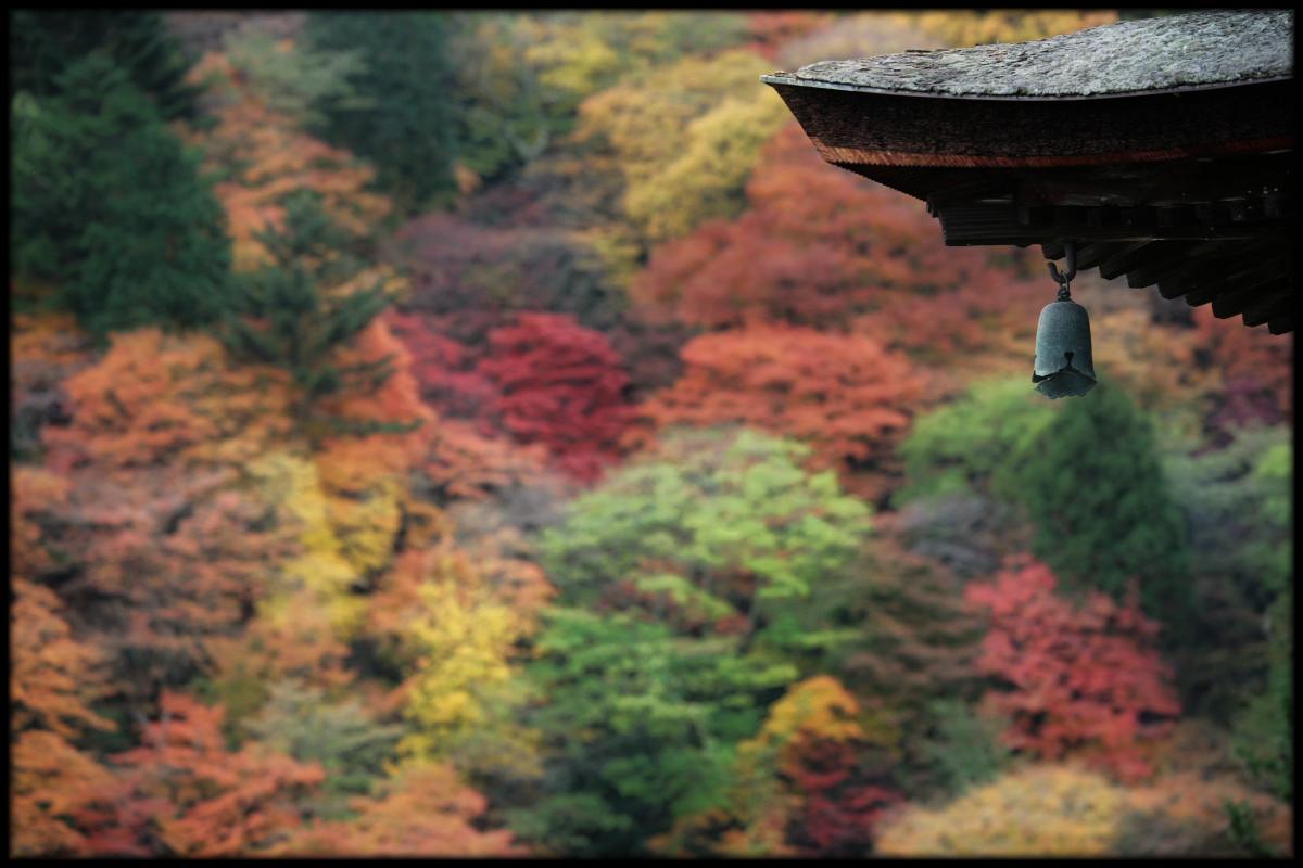 紅葉 2010 <善峯寺> 1_f0021869_23264126.jpg
