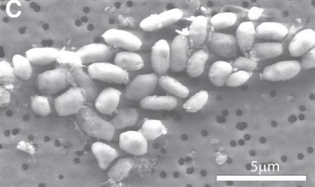 ヒ素を食べるバクテリアの話_b0099274_13503584.jpg