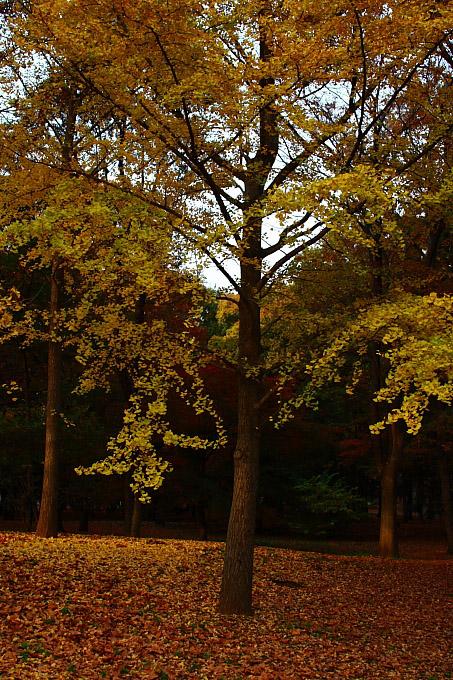 都立野川公園の紅葉 その3_e0165983_11591470.jpg