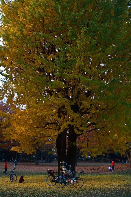 都立野川公園の紅葉 その3_e0165983_11593657.jpg