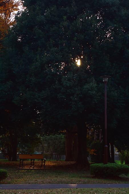 都立野川公園の紅葉 その3_e0165983_11595329.jpg