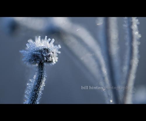 ★朝、霜が降りると、なぜ、その日は晴れるのか?_a0028694_1792250.jpg