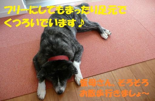 f0121712_14522761.jpg