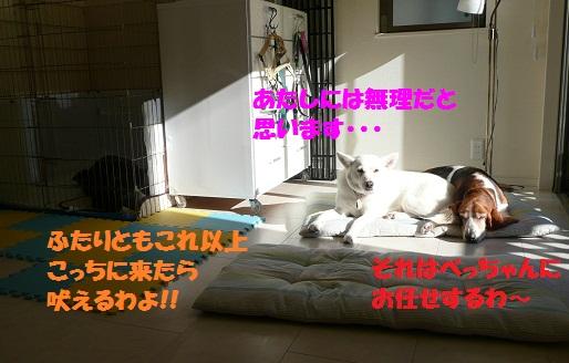 f0121712_14531598.jpg