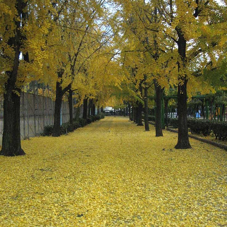 黄色の絨毯・・・・・・PUSH-PULL_d0138130_963289.jpg