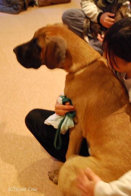 第4回「愛犬の為の整体教室」の模様 その1_c0099133_19512827.jpg