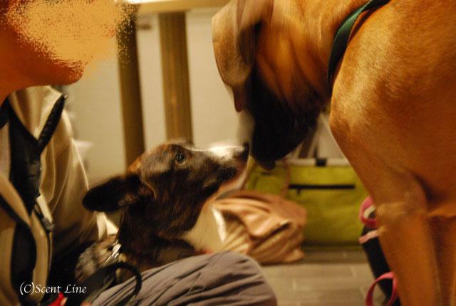 第4回「愛犬の為の整体教室」の模様 その1_c0099133_19534627.jpg