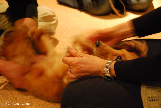 第4回「愛犬の為の整体教室」の模様 その1_c0099133_19535692.jpg