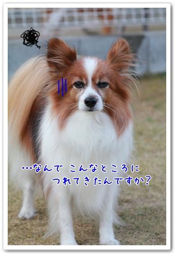 d0013149_952087.jpg