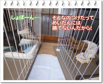 a0091865_14205155.jpg