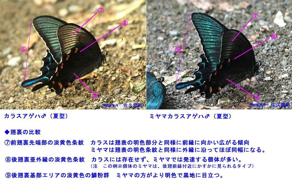 a0146869_7254865.jpg