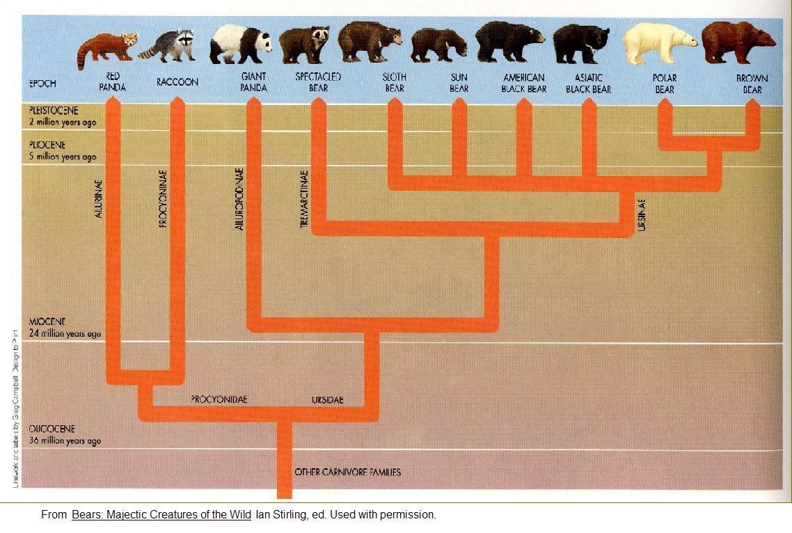 パンダが肉食を捨てる原因となった決定的遺伝子変異が起こった時_c0025115_23101030.jpg