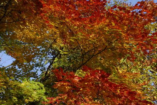 2010年11月 晩秋の色彩_c0219616_12574130.jpg
