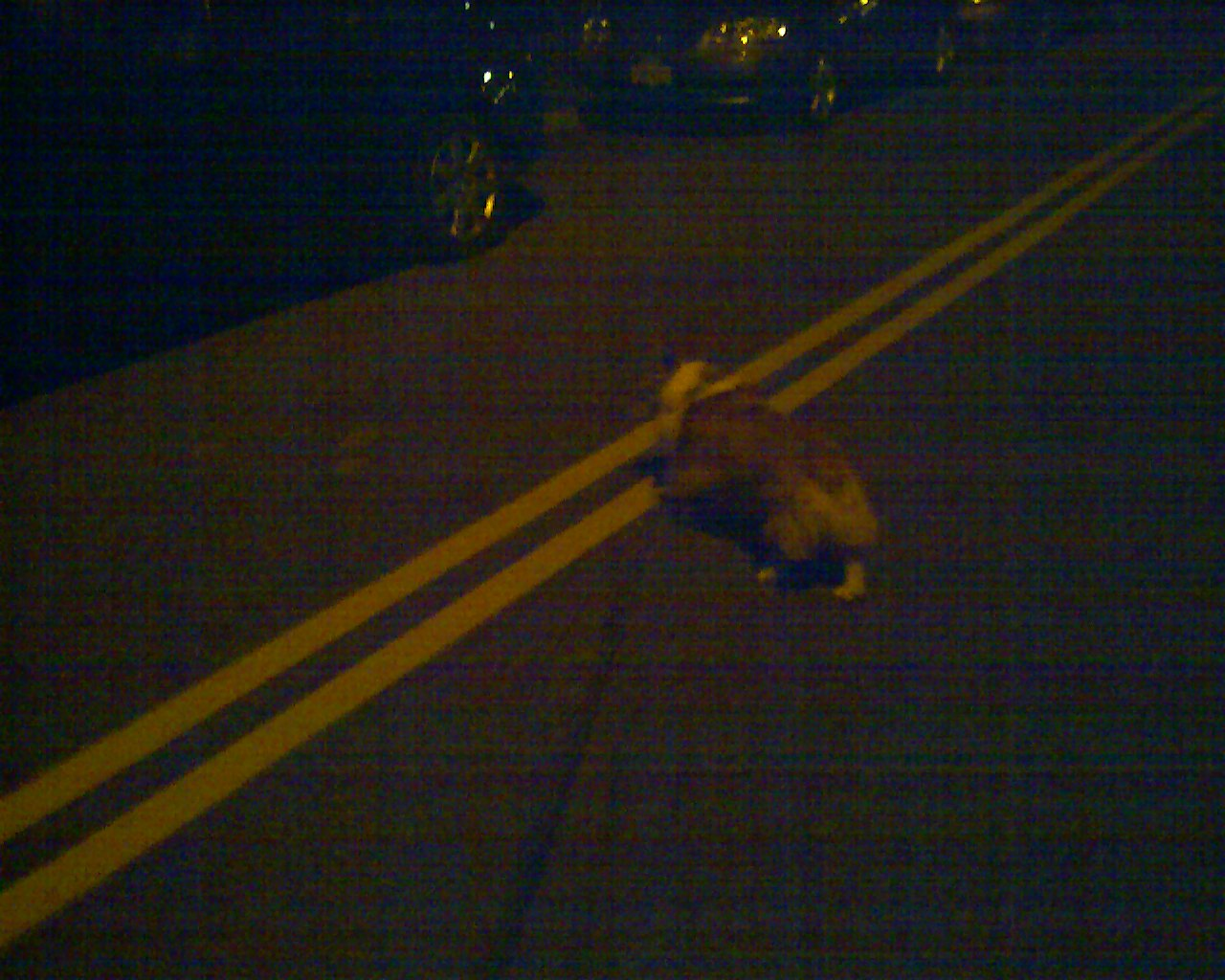 夜の散歩_e0147716_4112850.jpg