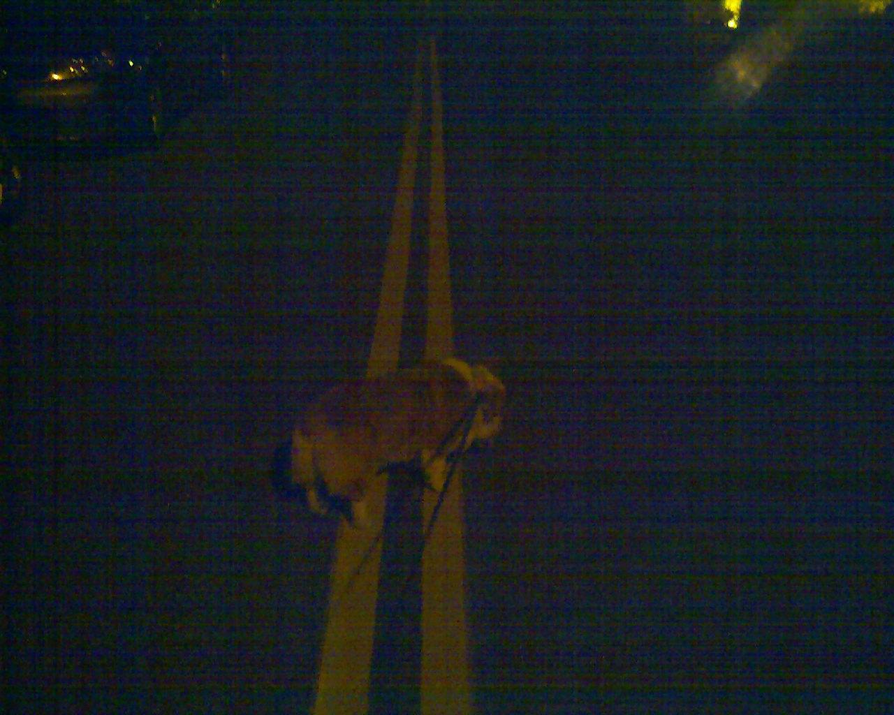 夜の散歩_e0147716_413289.jpg