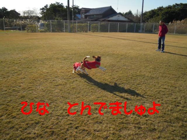 c0166622_173631.jpg