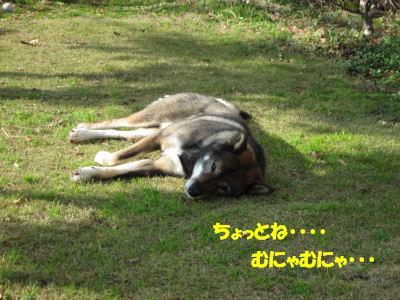 f0143123_20103431.jpg
