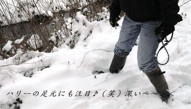 大根の葉と牛肉のぴりり佃煮風_d0104926_1411745.jpg