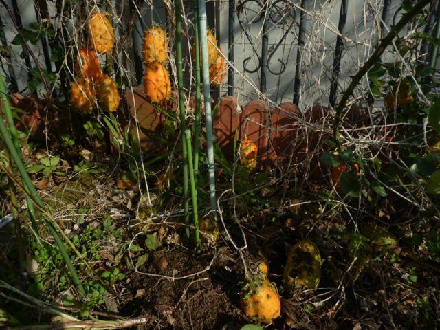 冬の収穫_b0054727_21101745.jpg