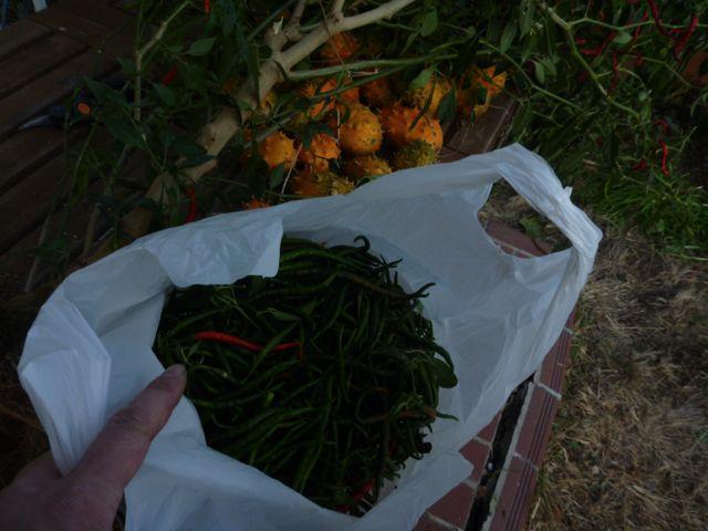 冬の収穫_b0054727_2175361.jpg