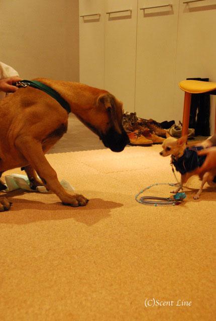 第4回「愛犬の為の整体教室」の模様 その1_c0099133_94059.jpg