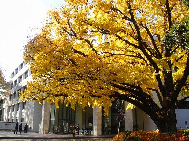 <2010年12月1日>港区探訪(その6):「麻布・青山・赤坂」編_c0119160_21522032.jpg