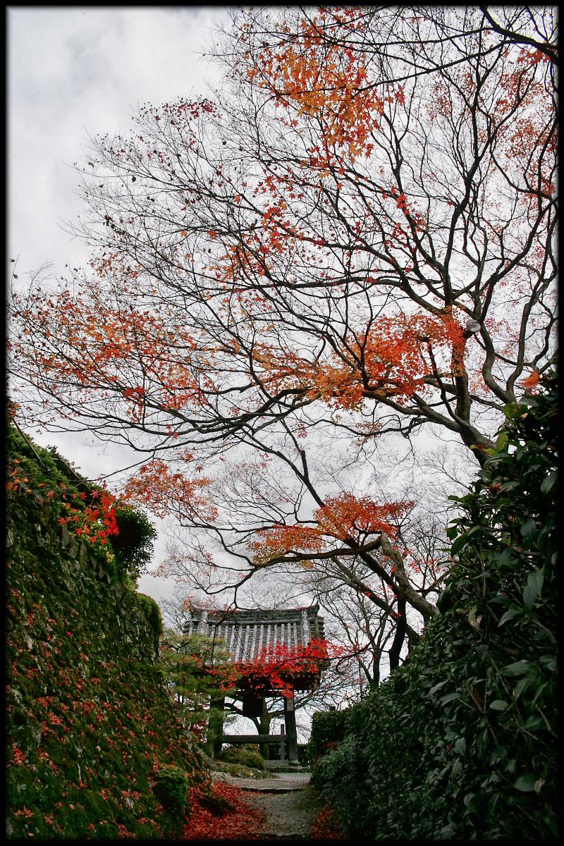 紅葉 2010 <善峯寺> 2_f0021869_0191349.jpg
