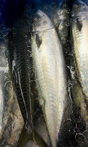 築地の鯖を焼き鯖寿司に♪_f0094800_1235222.jpg