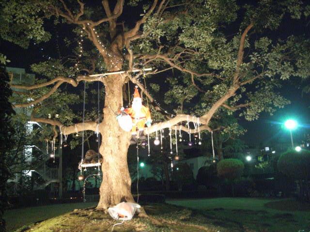 クリスマスライトアップ_e0116211_93592.jpg