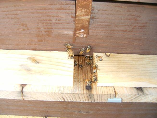 花園養蜂場へ行ってきました_d0155439_21285697.jpg