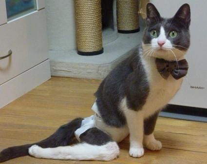 猫のお友だち 祿太くん編。_a0143140_2229444.jpg