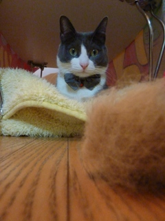 猫のお友だち 祿太くん編。_a0143140_22311837.jpg