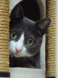 猫のお友だち 祿太くん編。_a0143140_22341385.jpg