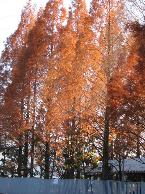川越市もめっきり冬に_b0115553_10565395.jpg