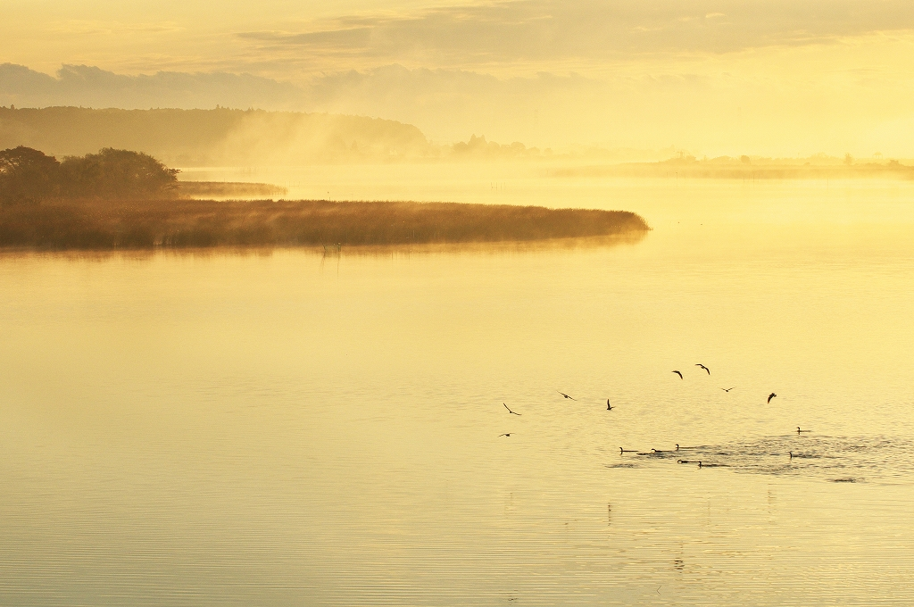 霧の朝 4_f0018464_6495769.jpg
