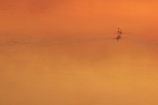 霧の朝 4_f0018464_6501621.jpg