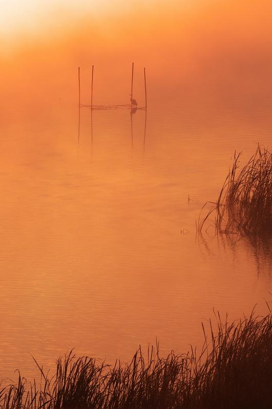 霧の朝 4_f0018464_6503649.jpg