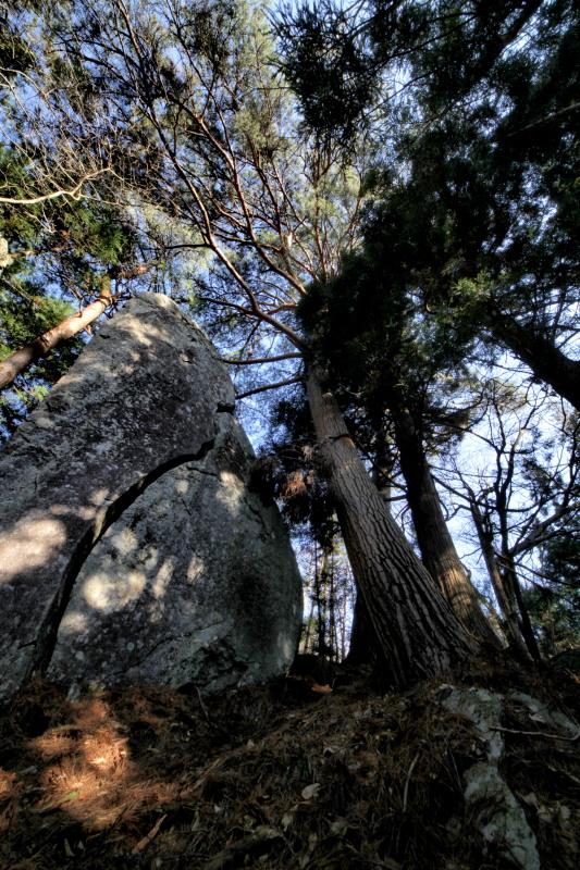 「遠野物語拾遺10(樹木と石の位の比較)」_f0075075_197472.jpg