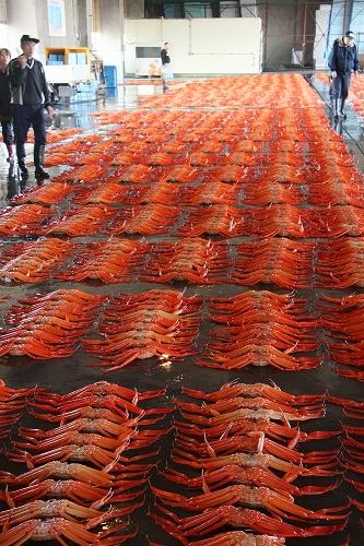 富山 新湊漁港の昼セリ1_c0196076_2332914.jpg