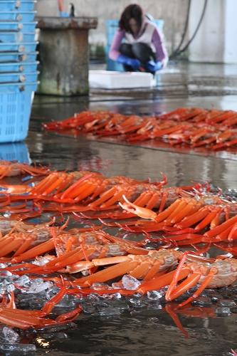 富山 新湊漁港の昼セリ1_c0196076_2333295.jpg