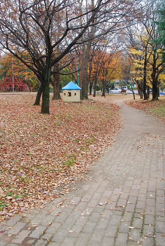 枯葉の与野公園_c0187781_22110100.jpg