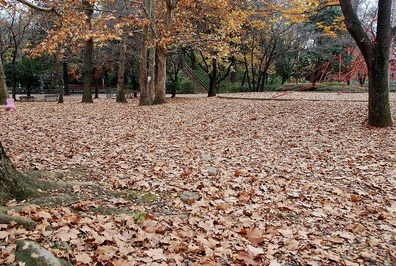 枯葉の与野公園_c0187781_22112082.jpg