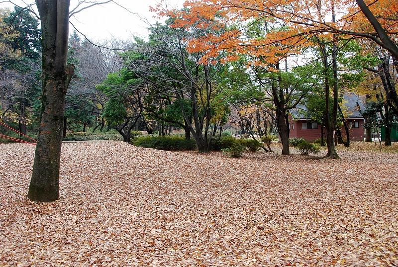 枯葉の与野公園_c0187781_22114285.jpg