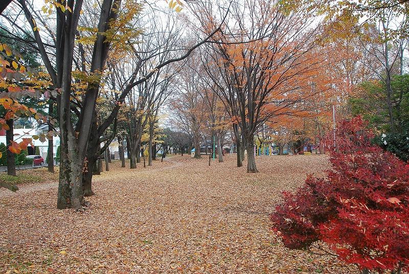 枯葉の与野公園_c0187781_22124082.jpg