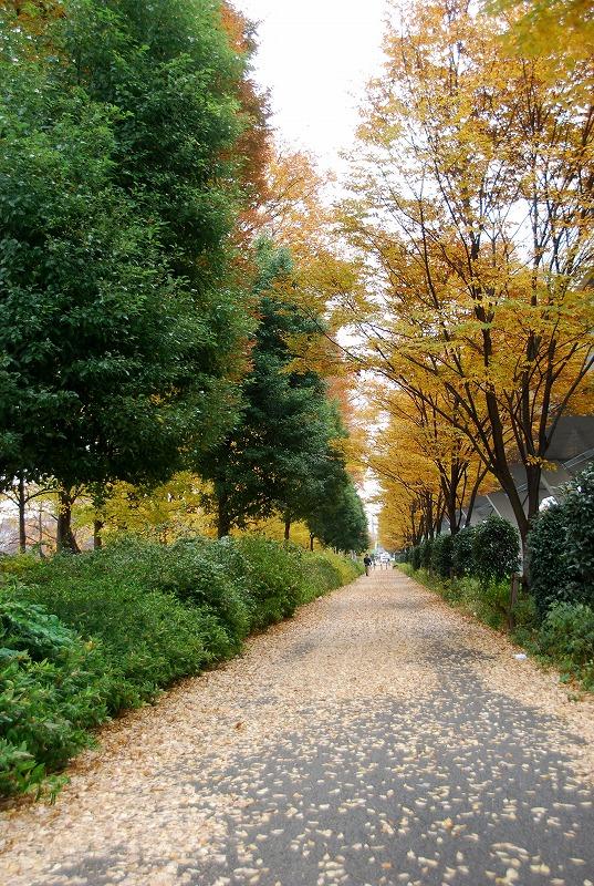 枯葉の与野公園_c0187781_22152724.jpg