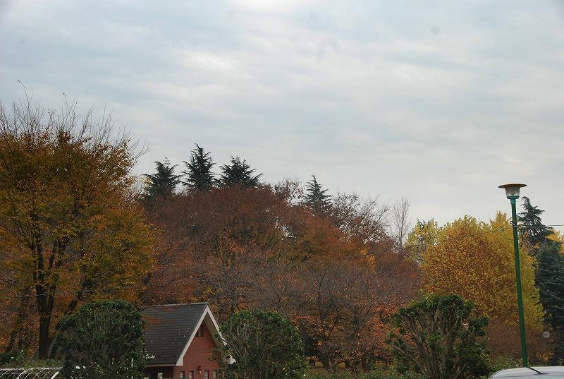 枯葉の与野公園_c0187781_22161451.jpg