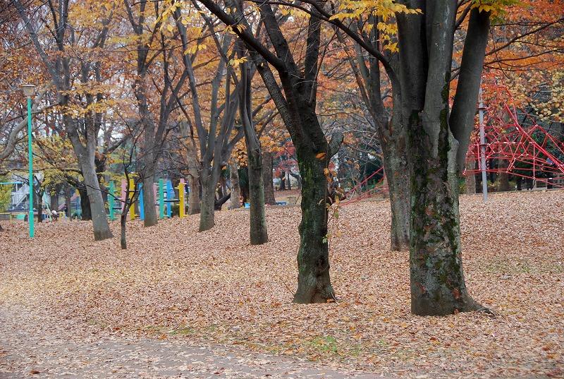 枯葉の与野公園_c0187781_22175294.jpg