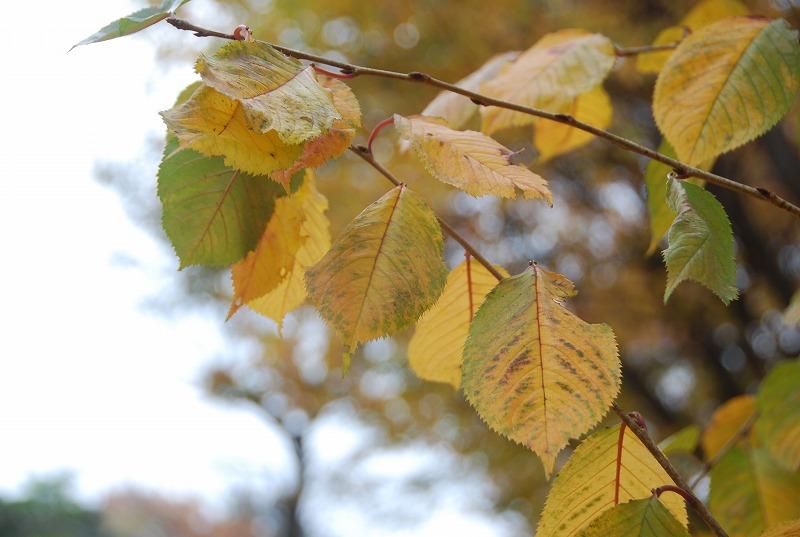 枯葉の与野公園_c0187781_22181988.jpg