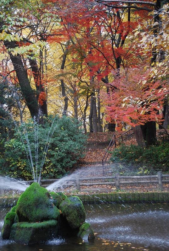枯葉の与野公園_c0187781_2219964.jpg